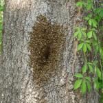Bee.Tree