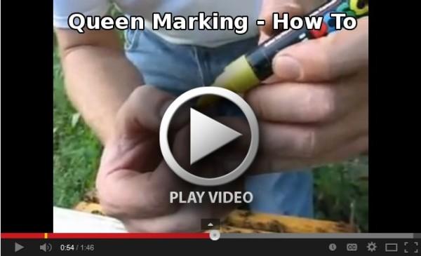 Queen Marking