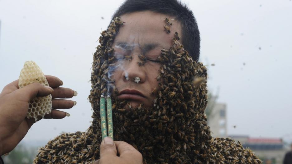chinese_beekeeper_she_ping_bee_bearding