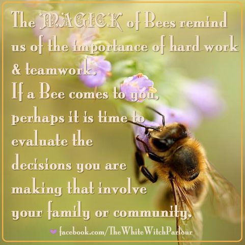f02b6fa561c0e105a8d9e7e1230bdfea--bee-quotes-spiritual-meaning
