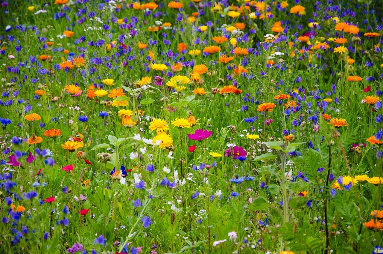 honeybee-wildflowers